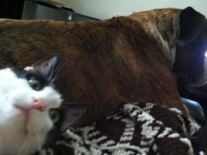Voter pour photobomb d'un chat curieux