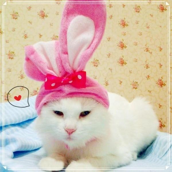 chat ou lapin?