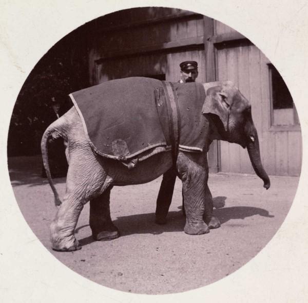Bébé elephant au zoo